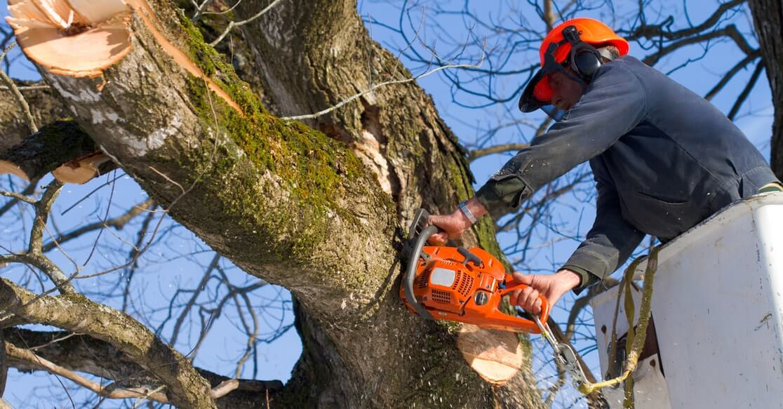 tree cutting and tree removal service in elgin il