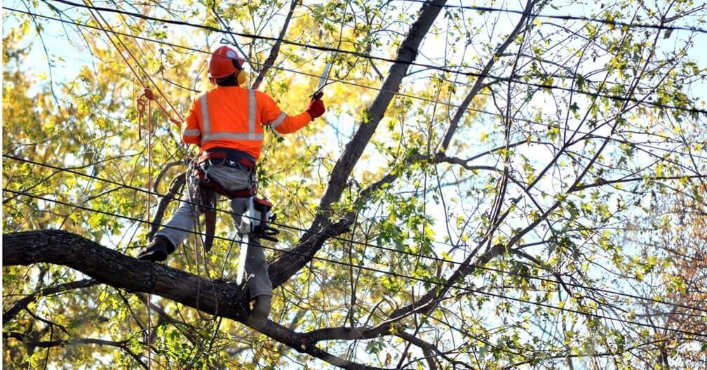 arborists tree doctor elgin il