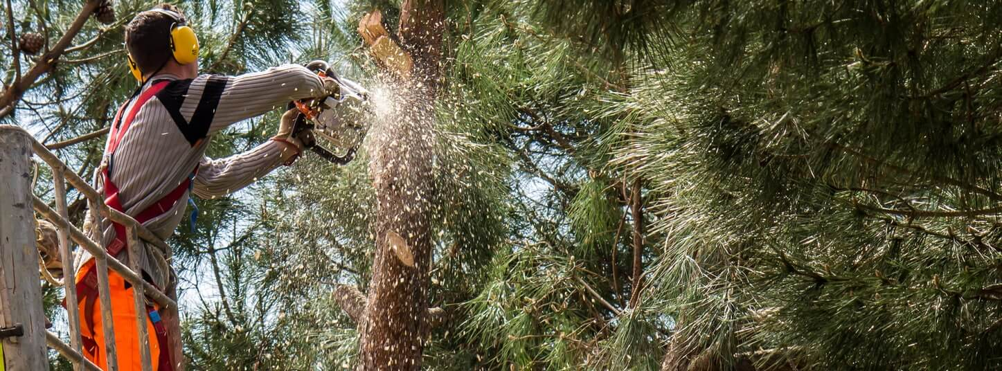 cutting down a tree trunk with a gas powered saw.jpg