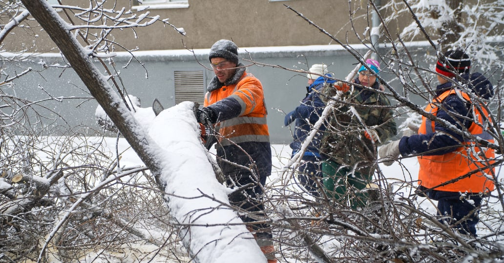 cutting down large tree limb - tree service in elgin