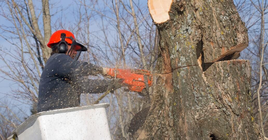 emergency tree service elgin il