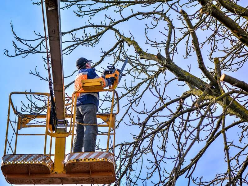 on a tree lift cutting down large tree branches with chainsaw.jpg
