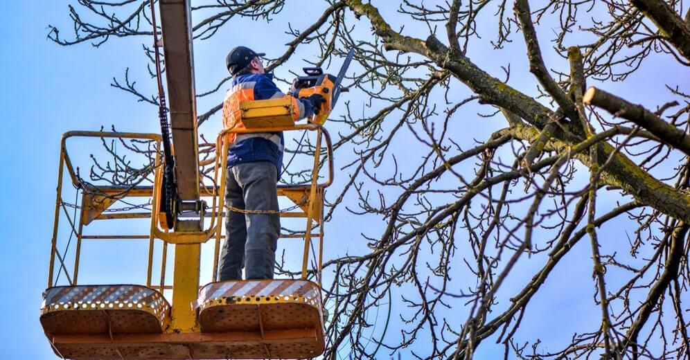 tree pruning in elgin