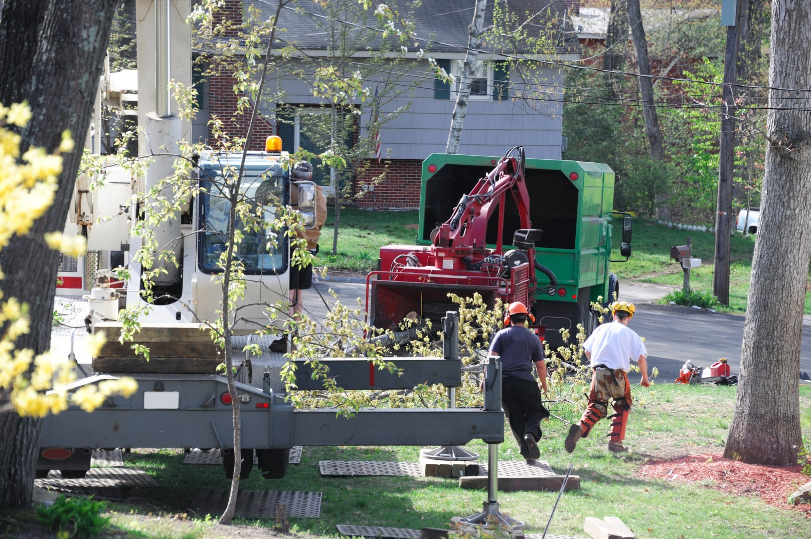 tree removal and limb cutting in elgin