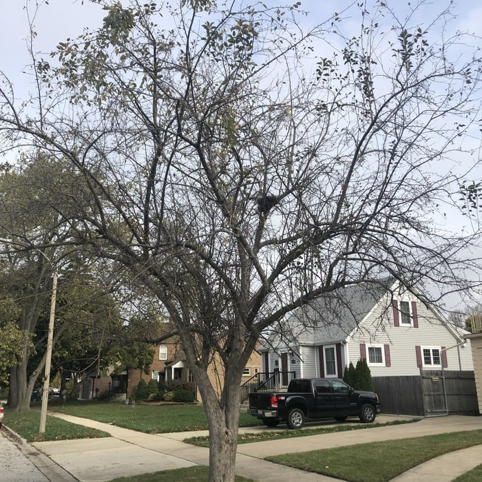 our tree trimming service in west dundee